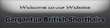 Gargantua British Shorthairs