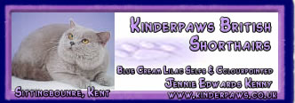 Kinderpaws British Shorthairs